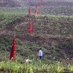 Китай может взять в аренду миллион гектар земли на Дальнем Востоке