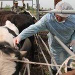 Нодулярный дерматит выявлен у животных в Курганской области