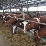 В Самарской области компания «Русагро» намерена построить 8 молочных ферм