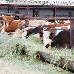 Правительство Республики Коми оказывает постоянную поддержку фермеру из Усть-Куломского района