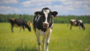 В подмосковных Озерах строится современная молочная ферма
