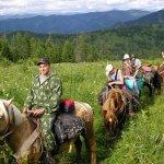 Алтайские селекционеры-генетики создают новую породу лошадей