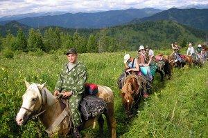 На Алтае выводят новую породу лошади -туристическую