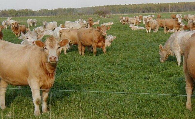 В Ленинградской обасти появятся два новых животноводческих комплекса