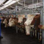 В Пензенской области появится крупный животноводческий комплекс