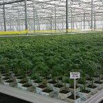 Компания «Магнит» расширяет тепличное хозяйство