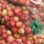 В Калининградской области садоводы сдают яблоки и груши на переработку