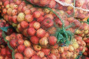 В Калининградской области началась приемка яблок и груш от населения