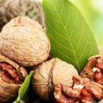 Грецкие орехи станут выращивать в Калининградской области