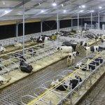 В Ленинградской области появилась современная животноводческая ферма