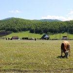 Депутаты Костромской думы заботятся о сельчанах