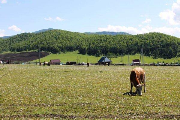 Костромские фермеры могут брать до 700 гектаров земли