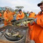 Росрыболовство поможет торговым сетям исключить посредников при закупке тихоокеанского лосося