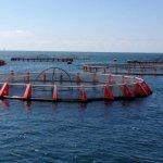 В России развивают производство региональной аква- и марикультуры