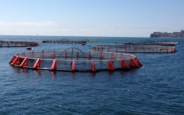 Минсельхоз РФ взял курс на развитие аквакультуры