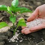 В Томске разработали нанотехнологию на основе кремния для растениеводческой отрасли