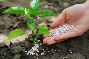 В Томске ученые разработали новый способ увеличения урожайности растений