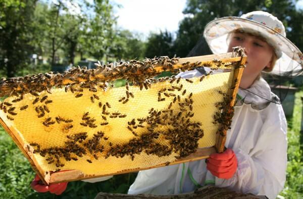 Новые лекарства для пчел будут выпускать в Башкирии