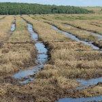 Урожай в Омской области под угрозой