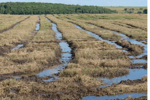 В Оимской области могут ввести режим ЧС чтобы компенсировать потери аграриев