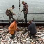 В начале октября во Владивостоке пройдет международный конгресс рыбаков