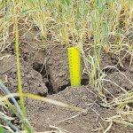 В Оренбургской области в результате засухи значительно снизился урожай зерновых