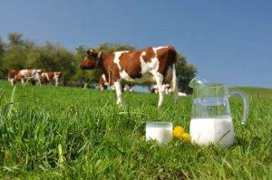 """ГК """"Кабош"""" планирует создать на Смоленщине молочно-товарные фермы"""