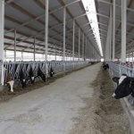 В Белгородской области начал работу еще один молочно-товарный комплекс