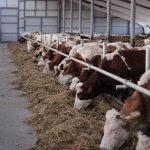 В Московской области десяток пустующих ферм в текущем году вернутся в строй