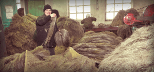 В Удмуртии создают кластер по производству льняного волокна