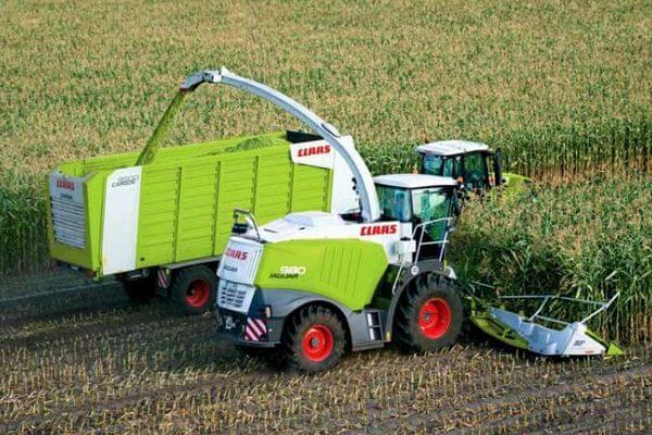 В коми начали выращивать кукурузу для корма скоту