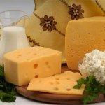 В Новгородской области снижается поголовье коров и производство сырого молока