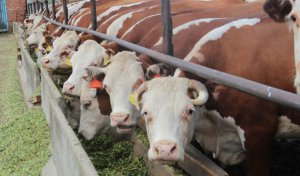 В Новосибирской области введен в строй животноводческий комплекс