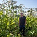 Сыктывкарские биологи ищут метод борьбы с борщевиком