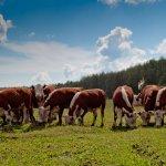 В Ярославской области внедряют инновационный проект «Цифровой фермер»