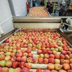 В Белгородской области компания «Агро-Белогорье» строит крупное хранилище для фруктов