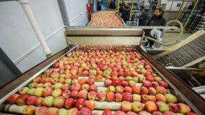 АгроБелогорье строит комплекс складов для хранения яблок