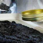 В Воронежской области увеличивают производство осетров