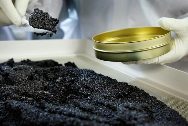 В Воронежской области будут производить черную икру и осетрину