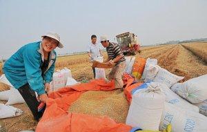 Китай намерен инвестирировать в лесопереработку и сельское хозяйство Красноярского края
