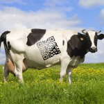 В Ленинградской области внедряют электронную систему качества молока
