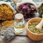 Первый кооператив по лекарственным растениям появится в республике Бурятия