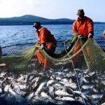 В этом году в России выловили рекордное количество лосося