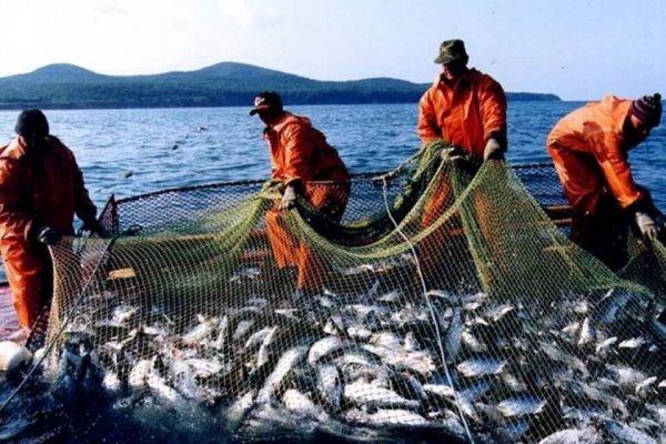 Рекордный улов лосося создал проблемы