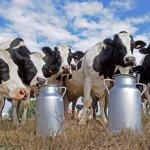 Подмосковная компания «ОСП агро» намерена создать в Дагестане молочное производство