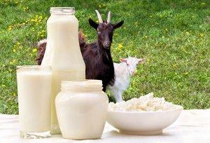 Московская область увеличивает объемы производства козьего молока