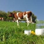 Глава Амурской области побывал на самой большой ферме Белогорского района