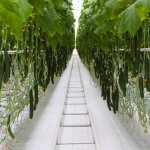 В Вологодской области бывший СХПК «Овощной» обрел вторую жизнь и нового хозяина