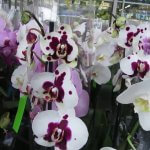 Польская компания планирует создание цветочных теплиц в Смоленской области