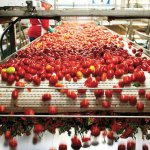 В Астраханской области планируют строительство завода по переработке помидор